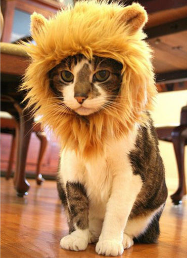 Picture of S Pet Dog Cat Artificial Lion Mane Wig Halloween Costume
