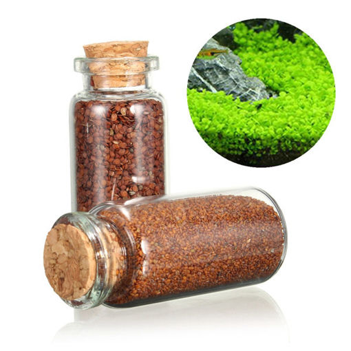 Picture of Plant Seed Aquarium Fish Tank Plants Prospects Grass Seed Grass Landscaping Decoration